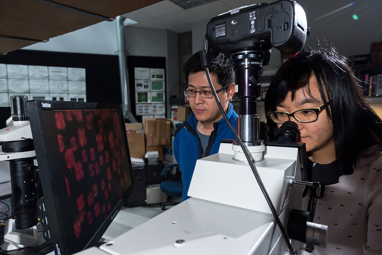 Two researchers in a lab, one looking into a microscope lens with a picture projected onto a computer screen nearby