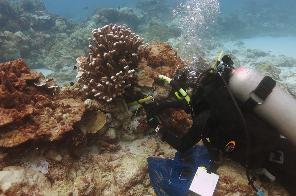 A snorkler installs temperature and salinity logging devices in a coral reef
