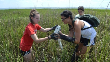 Digging in the marsh