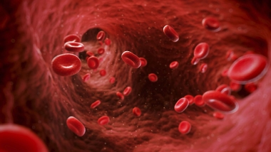 illustration of blood cells moving through an artery