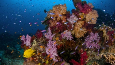 Lively Pacific reef