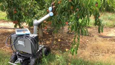 GTRI's Peachy Robot Utilizes Deep Learning to Automate Certain Aspects of the Peach Cultivation Process