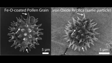 Magnetic Pollen Particles