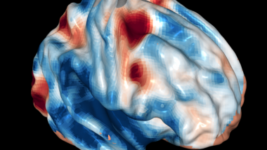 FMRI brain image frontal cortex vision