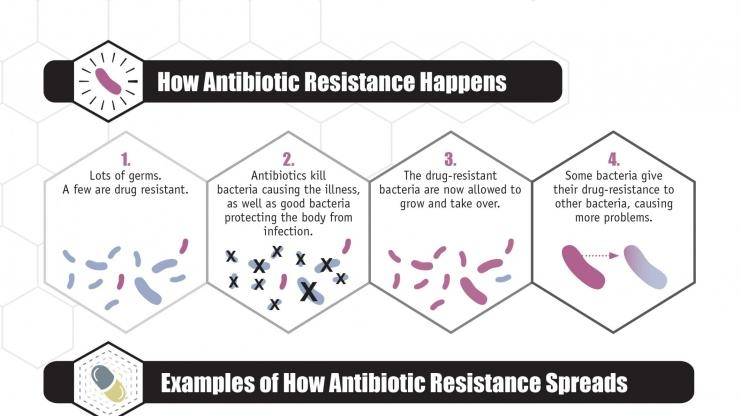 Evolution of bacterial resistance to antibiotics