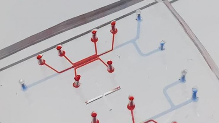 Blood-brain barrier on a chip