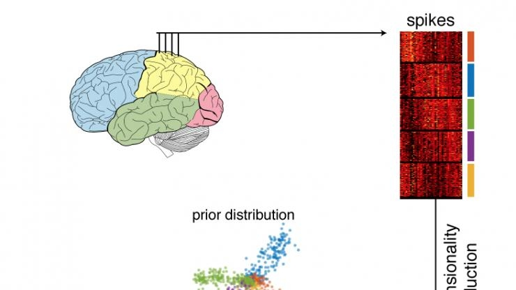Neuron firings decoded into patterns and graphed