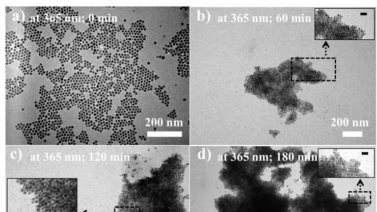 Evolution of nanoparticle assemblies