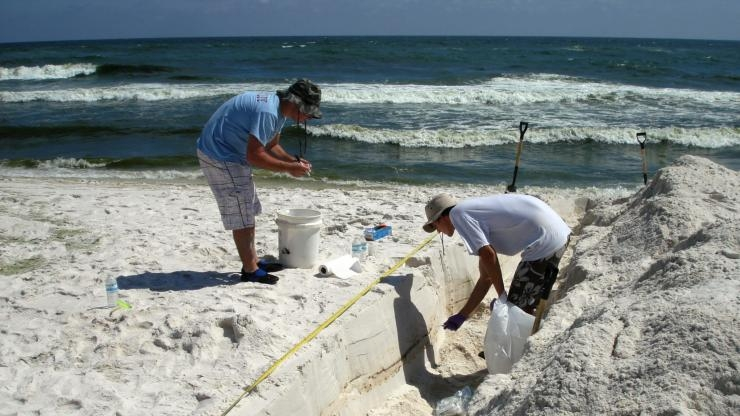 Sampling Microbial Communities in Beach Sand