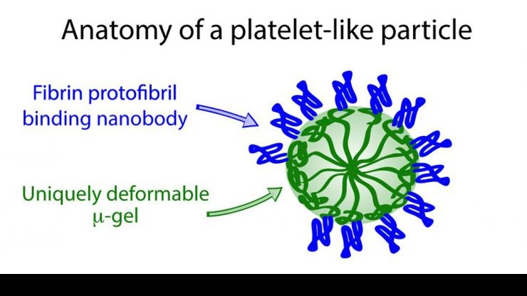 Anatomy of platelet-like particle