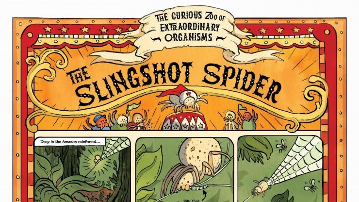 Cartoon explanation of slingshot spider