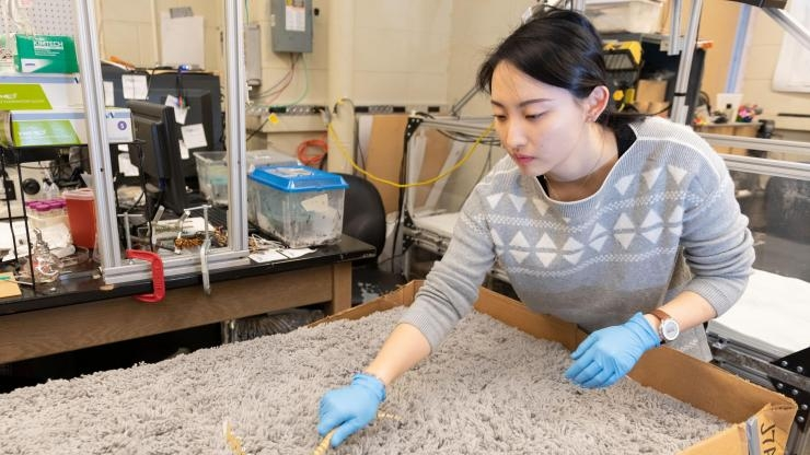 Studying snakes on granular surfaces