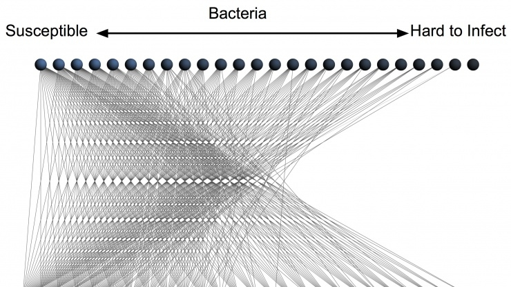 Bacteria-phage nested pattern